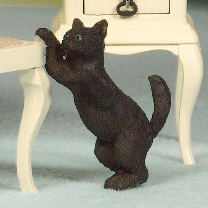 Playful Poppy, the Cat (PR)