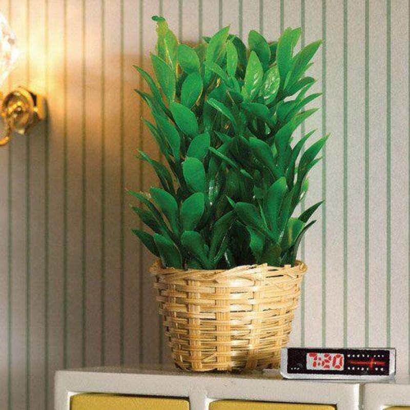 Bushy Plant in Basket