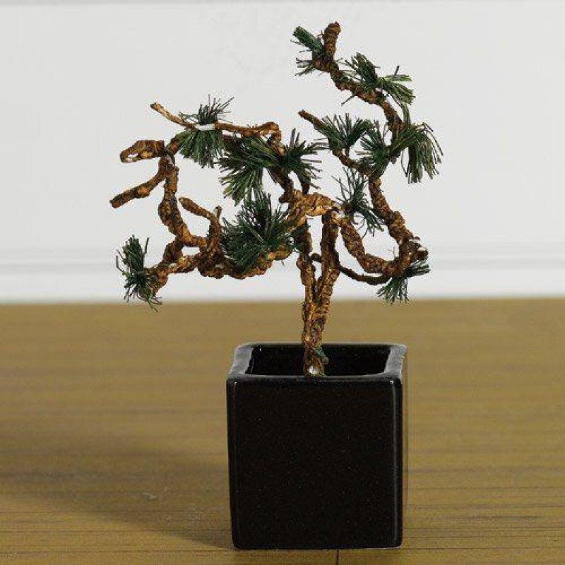 Ornamental Bonsai Tree