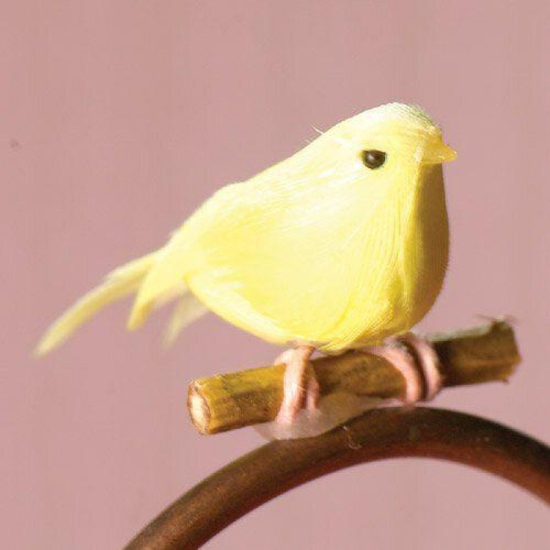 Saffron the Canary Bird