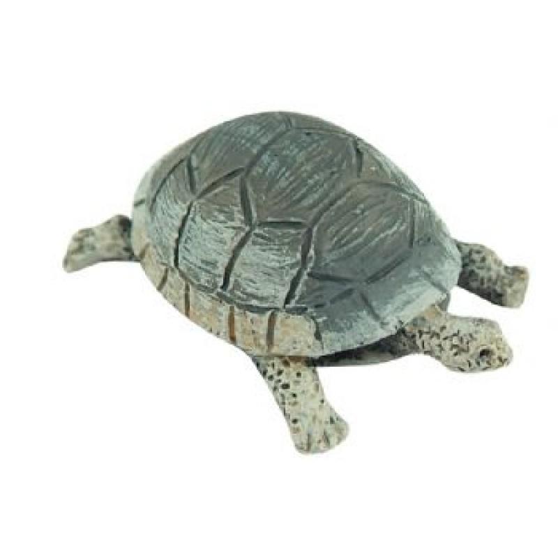 Tortoises, 12 pack