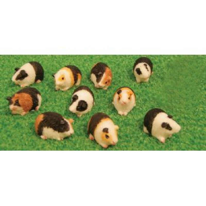 Assorted Guinea Pigs, 12 pack