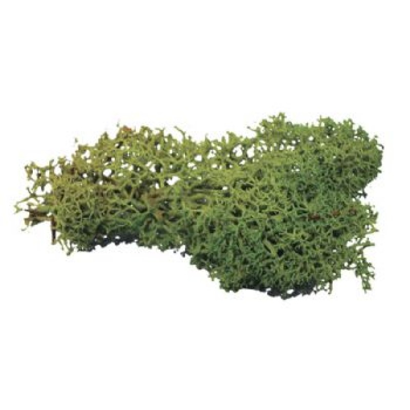 Dark Green Lichen,20g