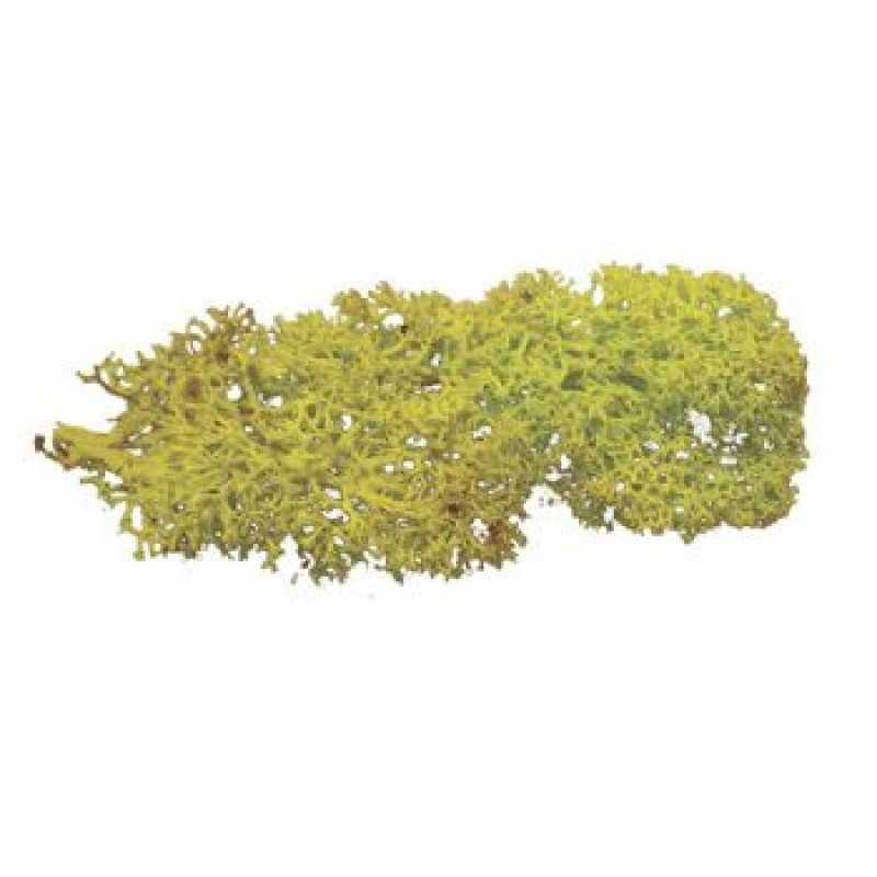 Light Green Lichen, 20g