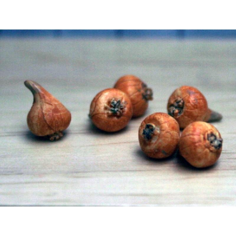Onion - 1 piece