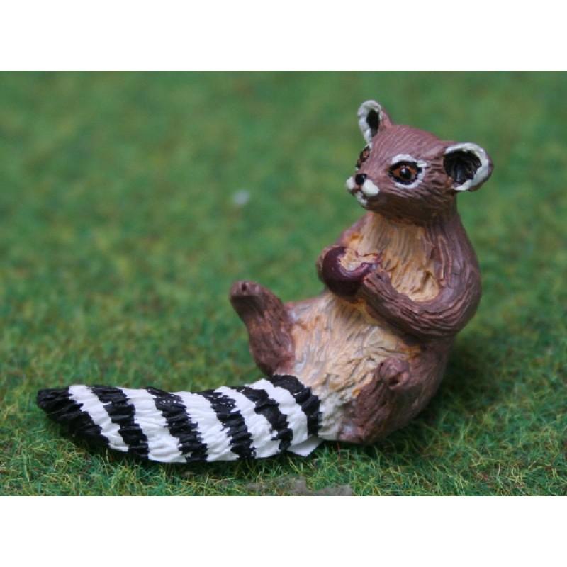 Ringtail Raccoon Eating