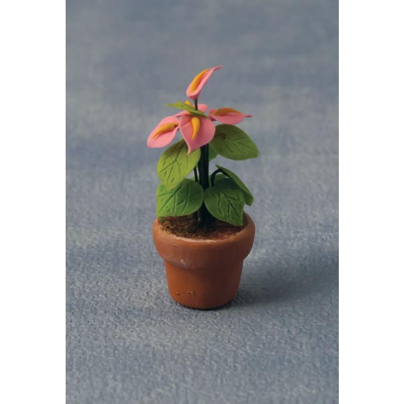 Babettes Miniaturen Anthurium in Pot