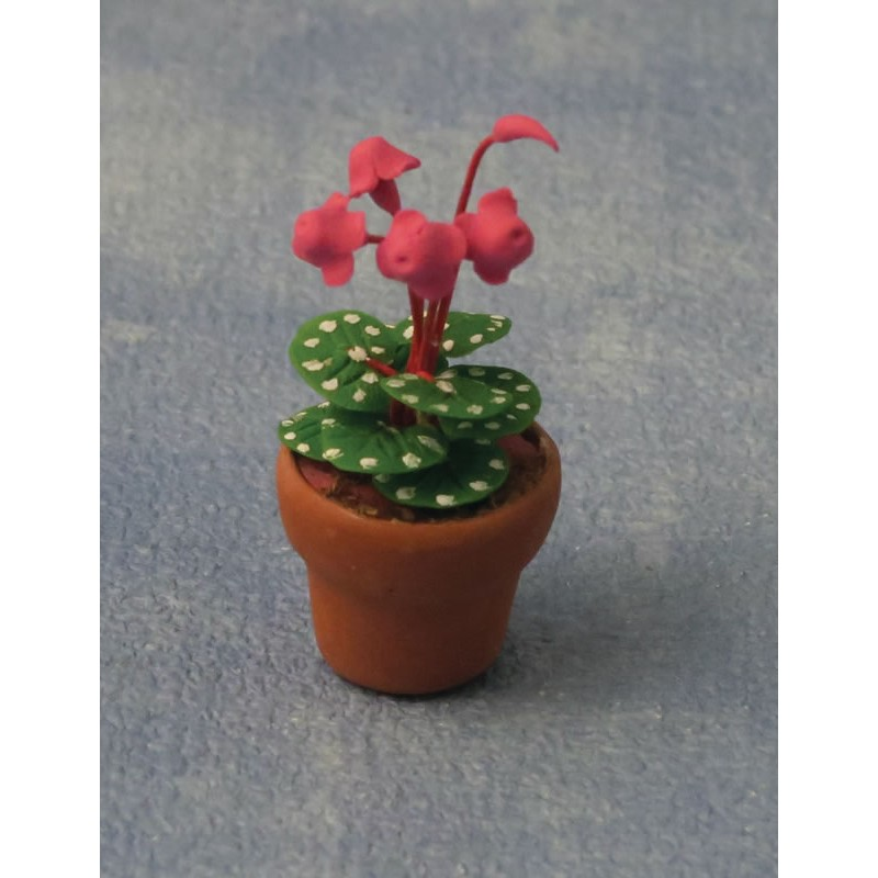 Babettes Miniaturen Cyclamen in Pot