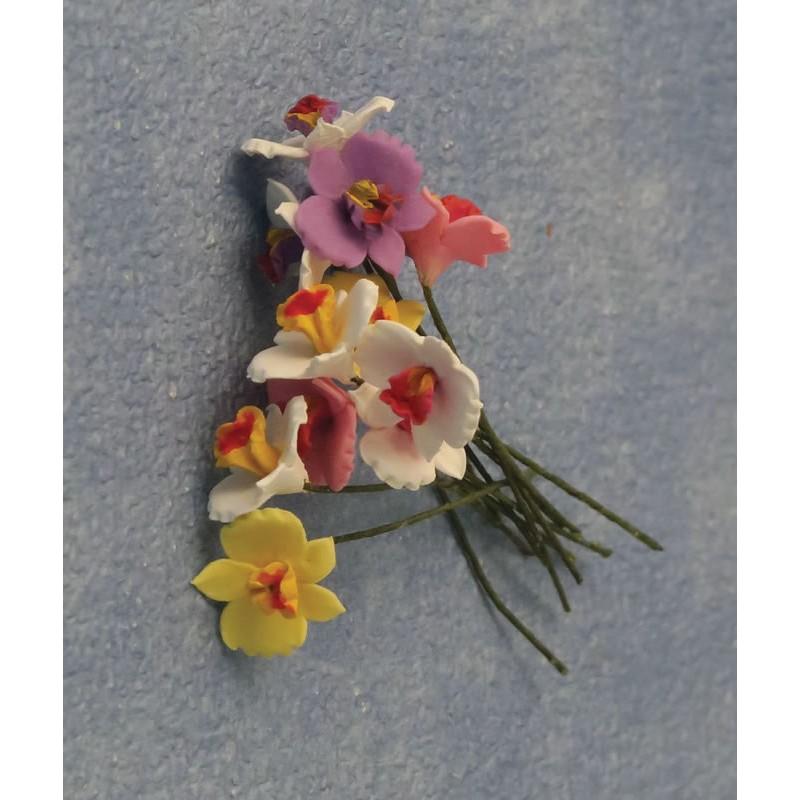 Babettes Miniaturen Orchids 12pc