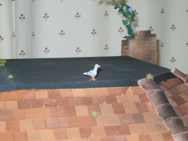 Pigeon on roof - The Corner Shop, Isobel Sage