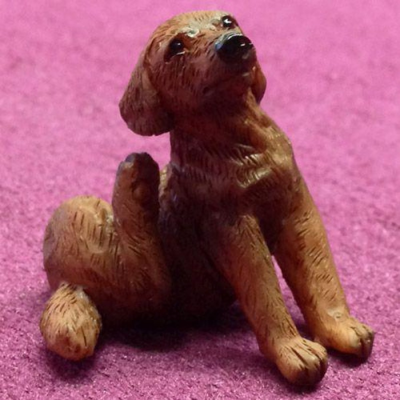 Coco the Scratching Labrador (PR)