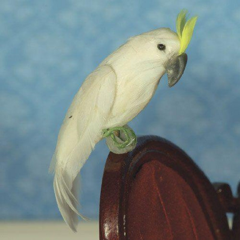 Chalky the Cockatoo