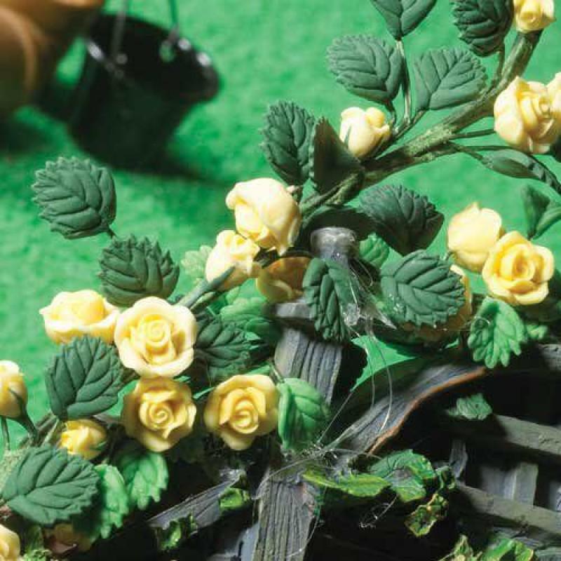 Climbing Yellow Roses 220mm