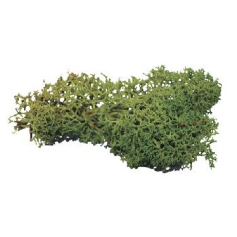 Dark Green Lichen,20g