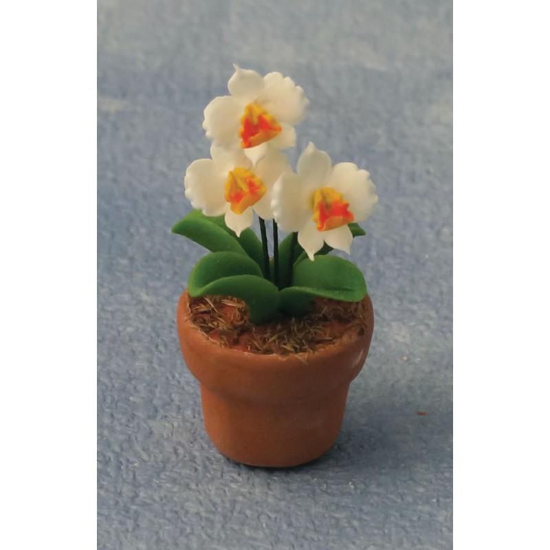 Babettes Miniaturen Orchid in Pot
