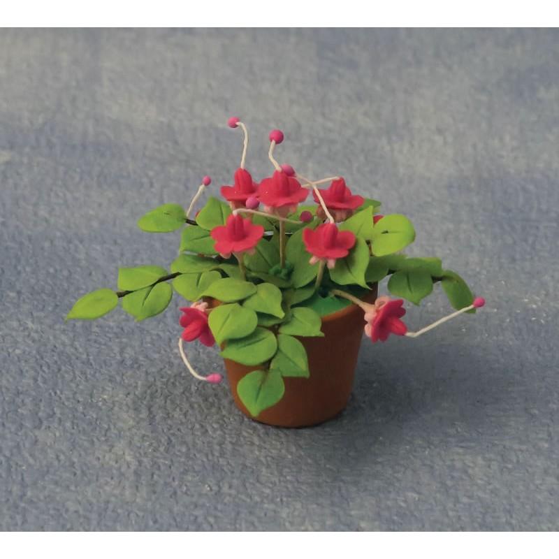 Babettes Miniaturen Fuchsias in pot